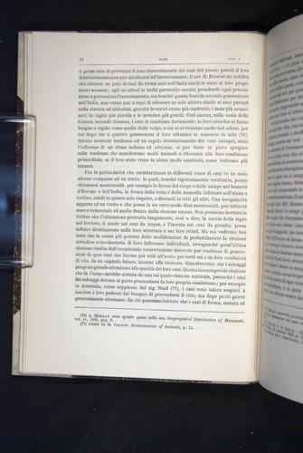 Image of Darwin-F920-1876-034
