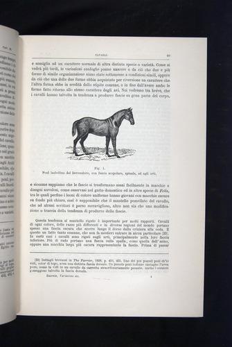 Image of Darwin-F920-1876-049