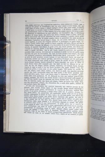 Image of Darwin-F920-1876-050