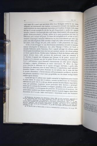 Image of Darwin-F920-1876-058