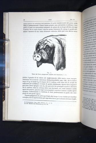 Image of Darwin-F920-1876-060
