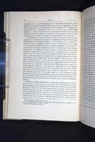 Image of Darwin-F920-1876-062