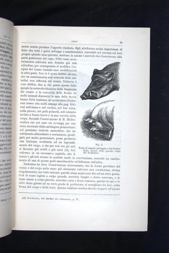 Image of Darwin-F920-1876-063