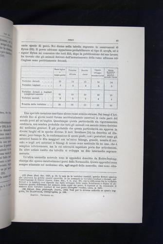 Image of Darwin-F920-1876-065
