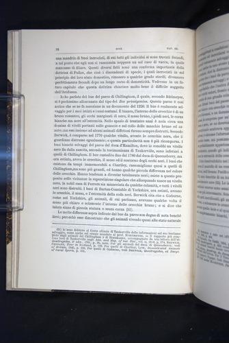 Image of Darwin-F920-1876-072