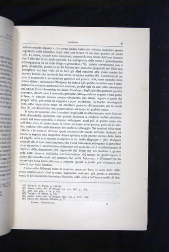 Image of Darwin-F920-1876-081
