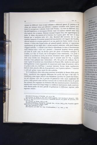 Image of Darwin-F920-1876-082