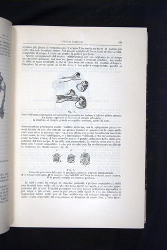 Image of Darwin-F920-1876-101
