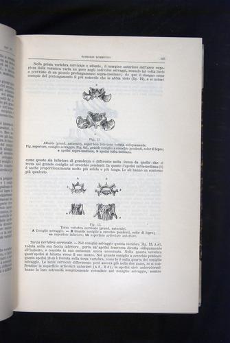 Image of Darwin-F920-1876-105