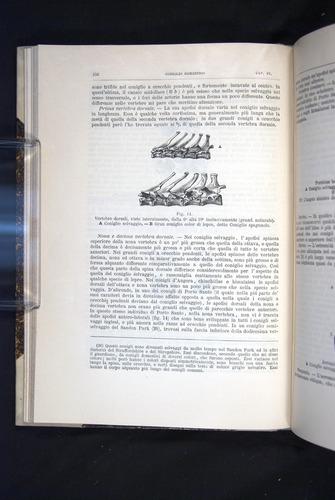 Image of Darwin-F920-1876-106