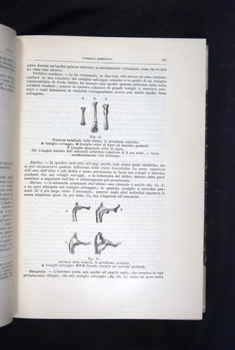 Image of Darwin-F920-1876-107