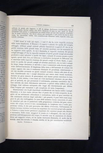 Image of Darwin-F920-1876-113