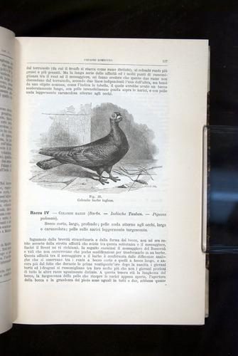 Image of Darwin-F920-1876-127