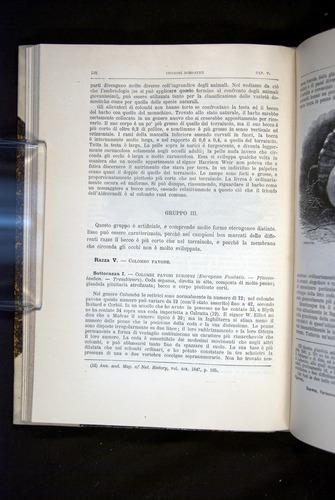Image of Darwin-F920-1876-128