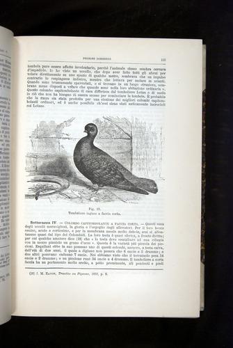 Image of Darwin-F920-1876-133