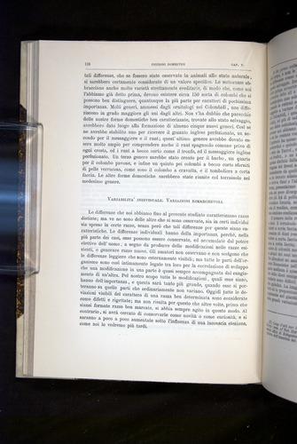 Image of Darwin-F920-1876-138
