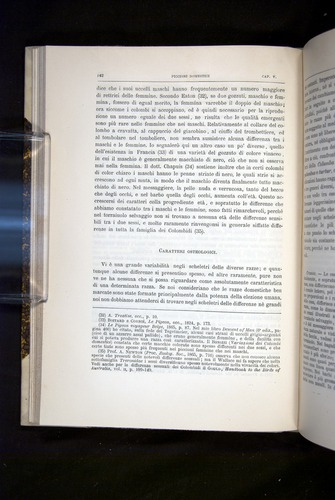 Image of Darwin-F920-1876-142