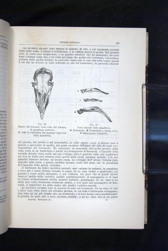 Image of Darwin-F920-1876-145