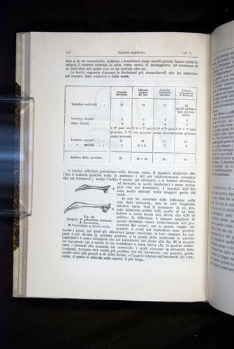 Image of Darwin-F920-1876-146