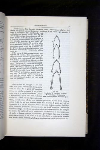 Image of Darwin-F920-1876-147