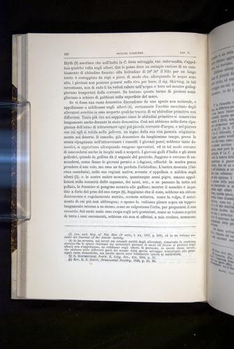 Image of Darwin-F920-1876-160