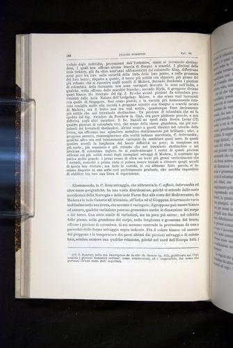 Image of Darwin-F920-1876-164