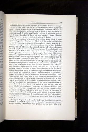 Image of Darwin-F920-1876-165