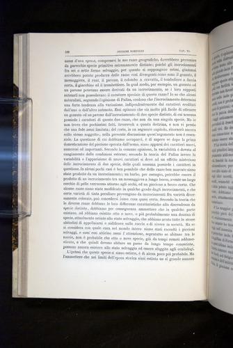 Image of Darwin-F920-1876-166