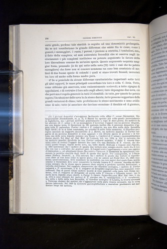 Image of Darwin-F920-1876-170