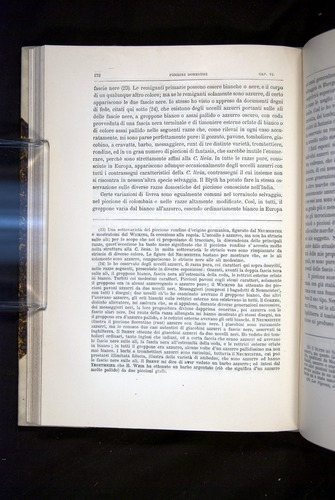 Image of Darwin-F920-1876-172