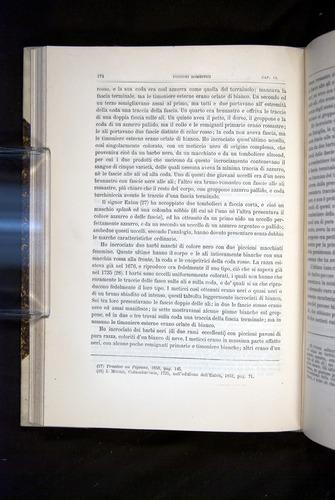 Image of Darwin-F920-1876-174
