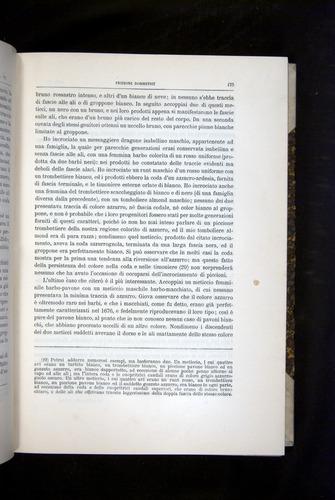 Image of Darwin-F920-1876-175