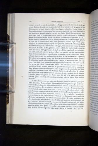 Image of Darwin-F920-1876-176