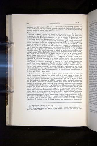 Image of Darwin-F920-1876-182