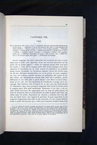 Image of Darwin-F920-1876-197