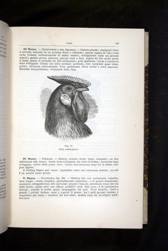 Image of Darwin-F920-1876-199