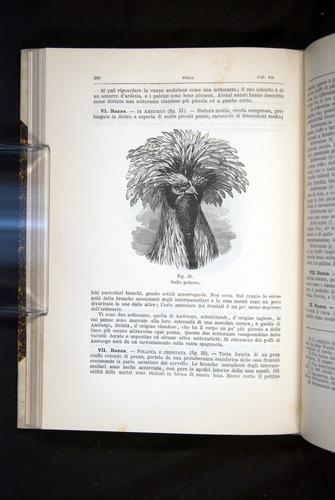 Image of Darwin-F920-1876-200