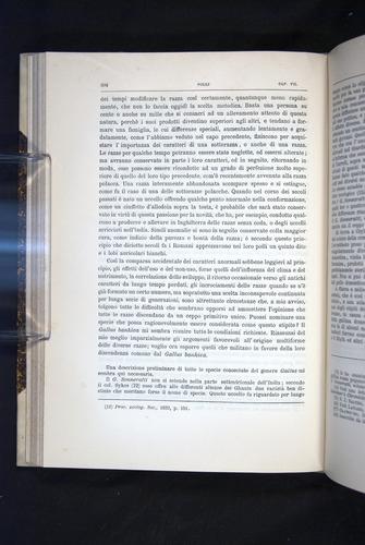 Image of Darwin-F920-1876-204