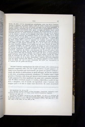 Image of Darwin-F920-1876-207