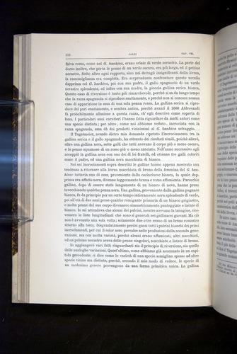 Image of Darwin-F920-1876-212