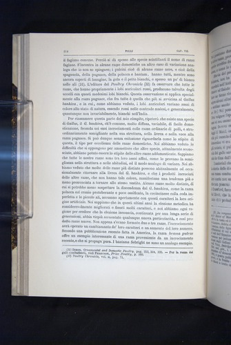 Image of Darwin-F920-1876-214