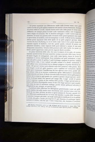 Image of Darwin-F920-1876-222