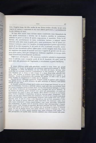 Image of Darwin-F920-1876-227