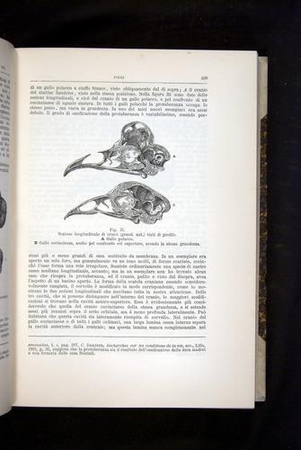 Image of Darwin-F920-1876-229