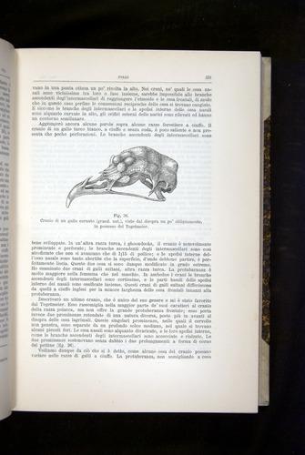 Image of Darwin-F920-1876-231