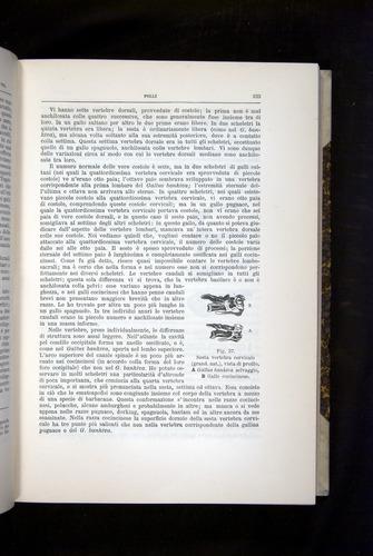 Image of Darwin-F920-1876-233