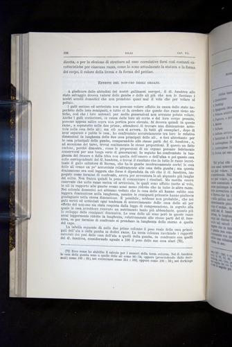 Image of Darwin-F920-1876-236