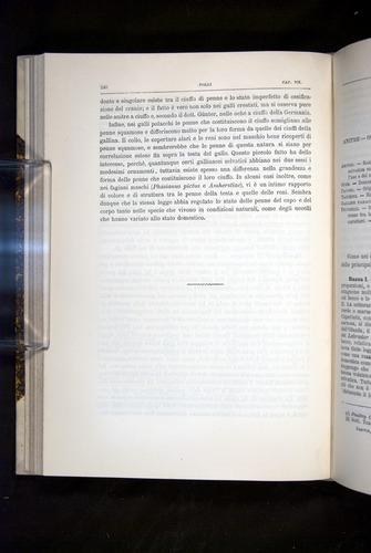 Image of Darwin-F920-1876-240
