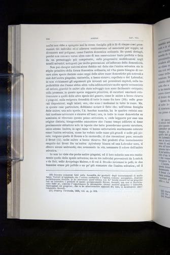 Image of Darwin-F920-1876-244