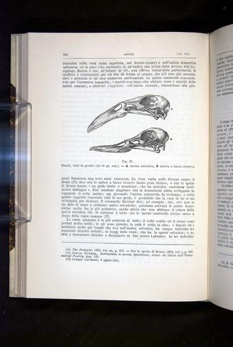 Image of Darwin-F920-1876-246